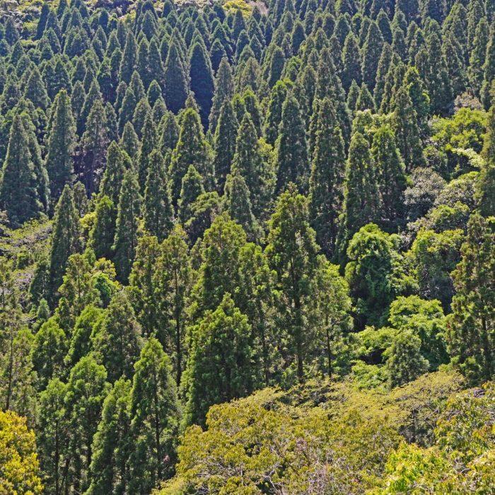 「水源税」・日本の森林資源