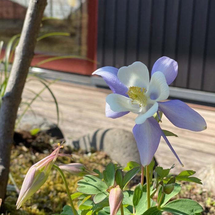 モデルハウス「家の展示館」、春先の庭のお手入れ